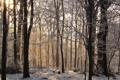 Картинка зима, иней, лес, деревья