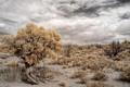Картинка пейзаж, дерево, пустыня