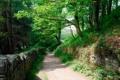 Картинка деревья, парк, стена, забор, дорожка, аллея