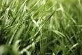 Картинка зелень, трава, капли, макро, природа, роса, блики