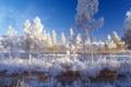 Картинка зима, иней, небо, вода, снег, деревья, пейзаж