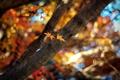 Картинка боке, размытость, яркие, ветви, природа, фон, свет