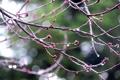 Картинка капли, blur, ветки, rain, macro, Nikon D40, drops on branches