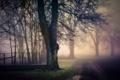 Картинка дорога, природа, туман, дерево