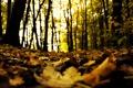 Картинка лес, осень, опавшие, сухие, размытость, листья, деревья