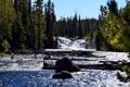 Картинка лес, река, камни, поток, ели, бревна