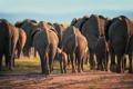 Картинка животные, пыль, вечер, африка, слоны, дикая природа