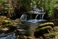 Картинка лес, деревья, река, камни, водопад, поток, пороги