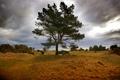 Картинка небо, трава, облака, дерево, холмы, Шотландия