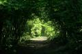 Картинка природа, заросли, дорожка, проход, арка, алея