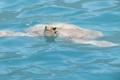 Картинка волны, заплыв, черепаха