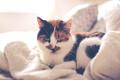 Картинка кот, кровать, подушка, одеяло