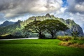 Картинка поле, дерево, гора
