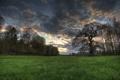 Картинка поле, ночь, дерево