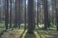 Картинка лес, деревья, природа, фото, дерево, картинки для рабочего стола