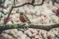 Картинка цветы, птица, боке, филиал