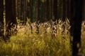 Картинка лес, лето, трава, природа