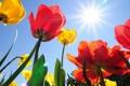 Картинка поле, небо, солнце, цветы, желтый, красный, фон