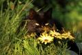 Картинка лето, трава, глаза, кот, черный, растения