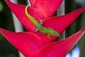 Картинка цветок, растение, ящерица, геккон