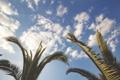 Картинка небо, листья, облака, пальмы