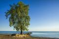 Картинка озеро, камни, дерево, берег, Эри, Lone Tree, Хантингтон-Бич