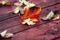 Картинка красные, листья, осень, доски