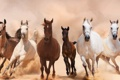 Картинка кони, пыль, лошади, бег, панорама, табун, аллюр