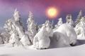 Картинка зима, лес, солнце, снег, елка, nature, winter