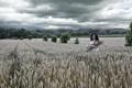 Картинка поле, девушка, природа, колосья