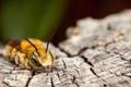 Картинка насекомое, кора, боке