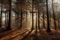 Картинка лес, природа, утро