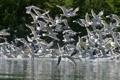 Картинка лес, птицы, река, фото, чайки, стая