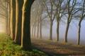 Картинка природа, утро, деревья, дорога, туман