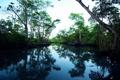 Картинка лес, отражение, река, сумерки, омут