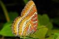 Картинка макро, бабочка, крылья