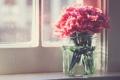 Картинка лепестки, розовые, цветы