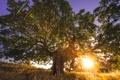 Картинка трава, солнце, закат, природа, дерево, саванна