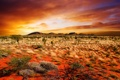Картинка поле, небо, закат, sky, landscape, nature, sunset