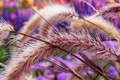 Картинка капли, роса, растение, Макро, колоски