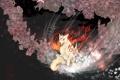 Картинка цветы, фон, волк, арт, okami, amaterasu, sakuya