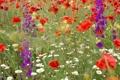 Картинка зелень, цветы, природа, растительность