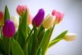 Картинка листья, тюльпаны, букет, лепестки