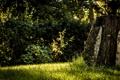 Картинка лес, зелень, деревья, пень