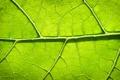 Картинка листья, зелень, лист, листок