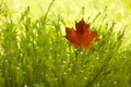 Картинка осень, лист, куст