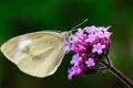 Картинка цветок, фон, бабочка, крылья, фокус, насекомое