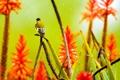 Картинка цветы, птица, растение, алоэ, агава