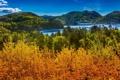 Картинка лес, лето, природа, озеро, блики, река