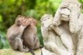 Картинка макаки, пара, обезьяны, профиль, статуя, приматы